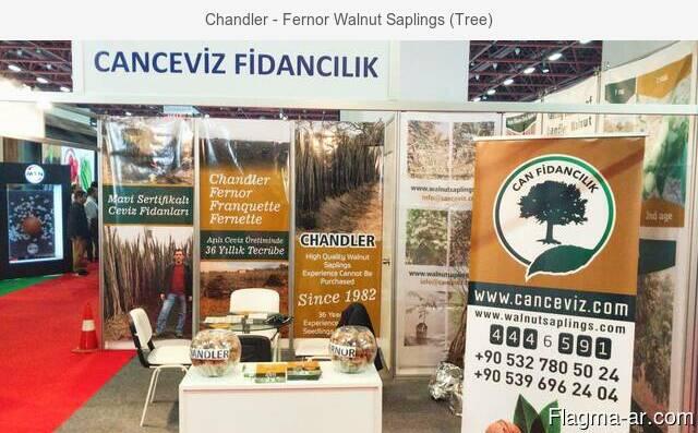 Chandler - Fernor Walnut Saplings (Tree)