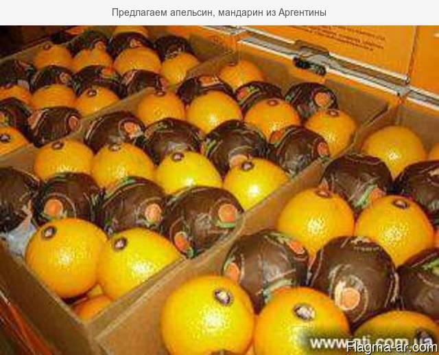 Предлагаем апельсин, мандарин из Аргентины